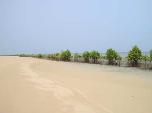 Mangroves in Snake Island