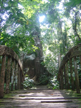 Century Old Trees
