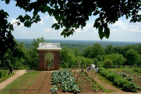 overlooking the vineyards