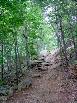 Whiteoak Canyon Trail (1)