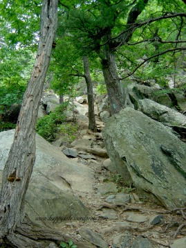 Whiteoak Canyon Trail (2)