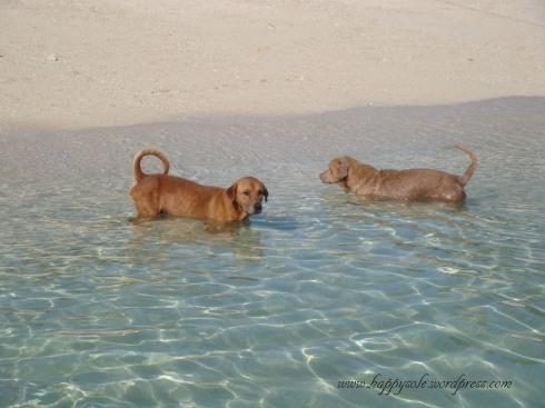 Island dogs, Antonia Island, 2010