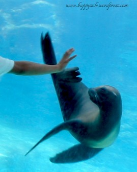 Aquarium of the Pacific, 2005